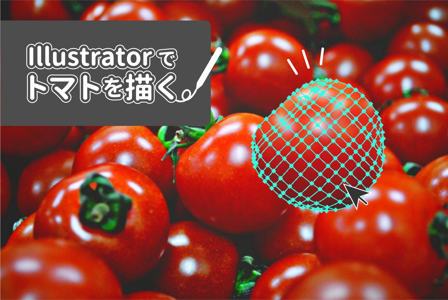 Illustrator トマトを描く Wand わんど 株式会社あんどぷらすのオウンドメディア